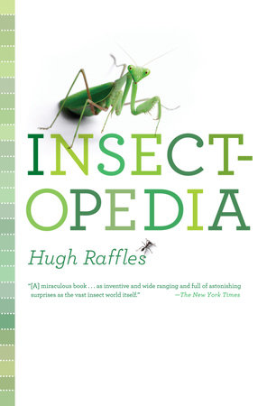 Insectopedia by Hugh Raffles