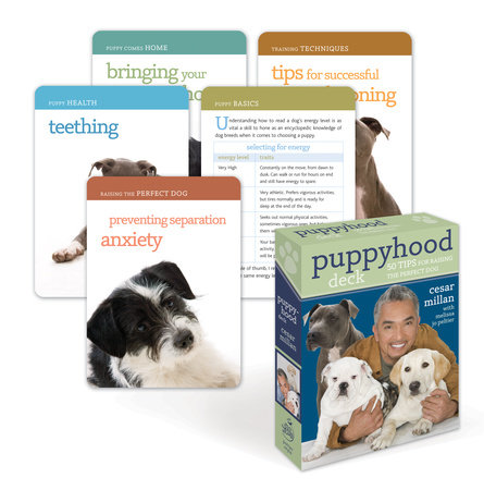 Puppyhood Deck by Cesar Millan