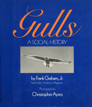 Gulls by Frank Graham