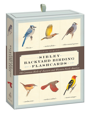 Sibley Backyard Birding Flashcards by David Allen Sibley