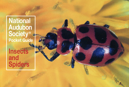 National Audubon Society Pocket Guide: Insects and Spiders by National Audubon Society