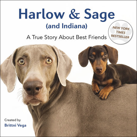 Harlow & Sage (and Indiana) by Brittni Vega