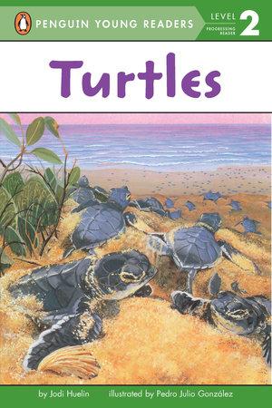 Turtles by Jodi Huelin