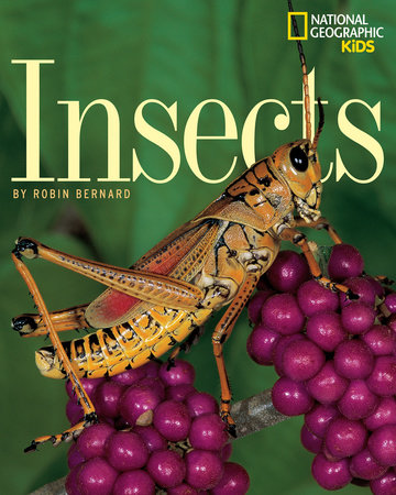 Insects by Bernard