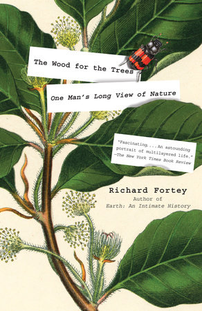 The cover of the book The Wood for the Trees