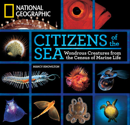 Citizens of the Sea by Nancy Knowlton