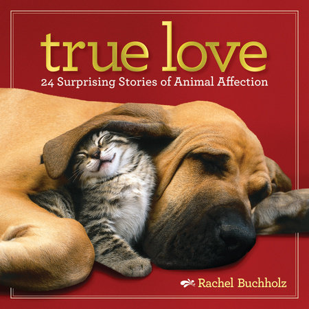 True Love by Rachel Buchholz