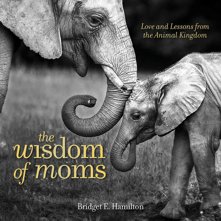 The Wisdom of Moms by Bridget E. Hamilton