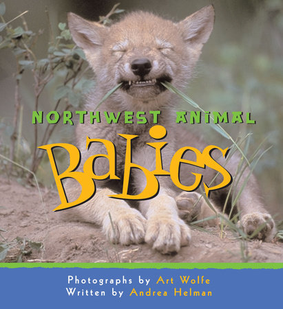 Northwest Animal Babies by Andrea Helman