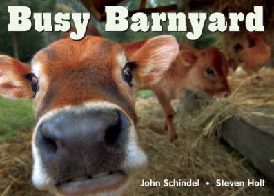 Busy Barnyard