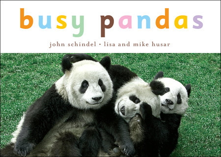 Busy Pandas by John Schindel