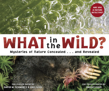What in the Wild? by David Schwartz and Yael Schy
