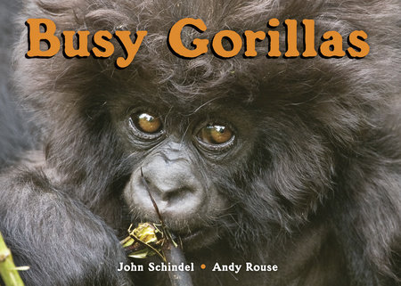 Busy Gorillas by John Schindel