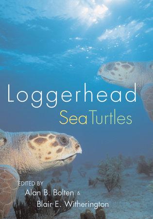 Loggerhead Sea Turtles by