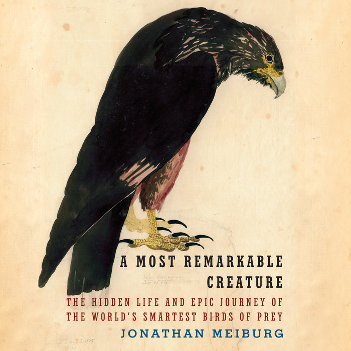 A Most Remarkable Creature Cover