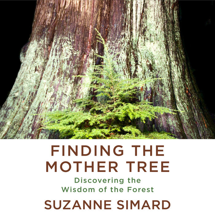 Finding the Mother Tree Cover