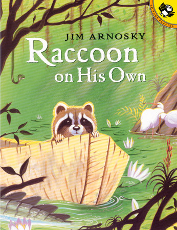 Raccoon On His Own