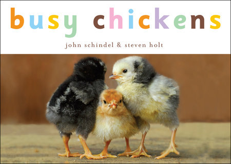Busy Chickens by John Schindel; photographs by Steven Holt