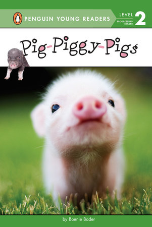 Pig-Piggy-Pigs