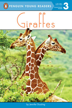 Giraffes by Jennifer Dussling
