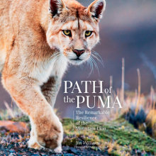 Path of the Puma Cover