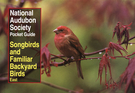 national audubon society pocket guide to songbirds and familiar rh penguinrandomhouse com Back Yard Finches Winter Back Yard Birds of PA
