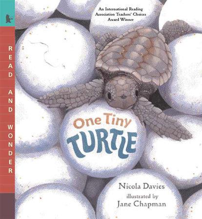 One Tiny Turtle by Nicola Davies