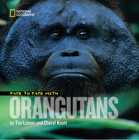 Face to Face With Orangutans by Tim Laman and Cheryl Knott