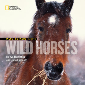 Face to Face With Wild Horses