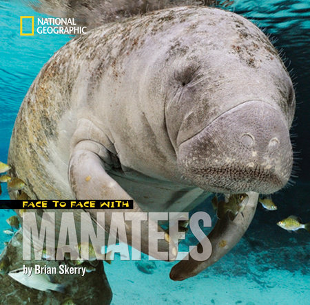 Face to Face with Manatees by Brian Skerry