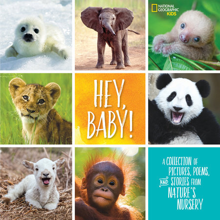 Hey, Baby! by Stephanie Warren Drimmer