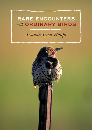 Rare Encounters with Ordinary Birds by Lyanda Lynn Haupt