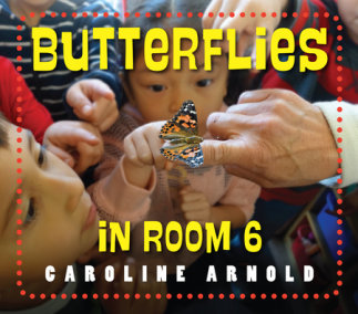 Butterflies in Room 6