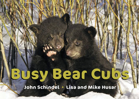 Busy Bear Cubs by John Schindel