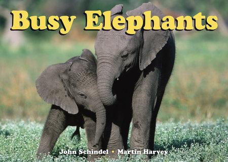 Busy Elephants by John Schindel