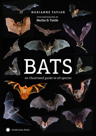 Bats by Marianne Taylor