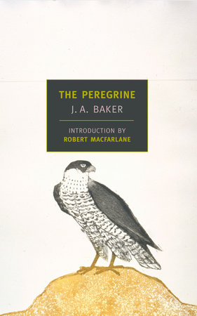The Peregrine