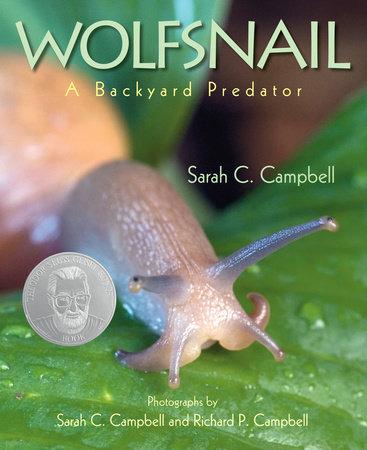Wolfsnail