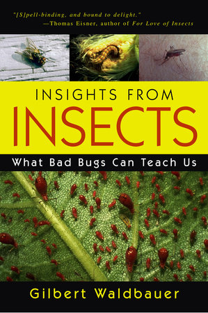 Insights From Insects by Gilbert Waldbauer
