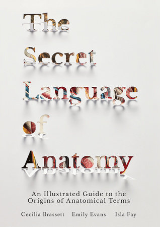 The Secret Language of Anatomy by Cecilia Brassett, Emily Evans and Isla Fay