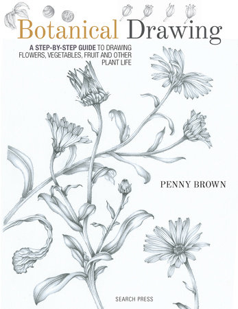 Botanical Drawing by Penny Brown