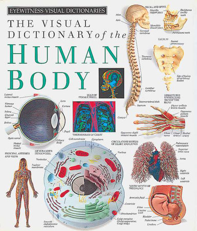 Eyewitness Visual Dictionaries: The Visual Dictionary of the Human Body by DK Publishing